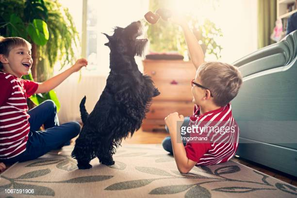 Two boys playing with their dog in the living room