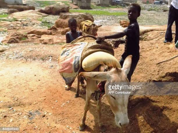 Two boys try to adjust the sand basket on their donkey at Ramin Jirga excavation site in Kawo area of Kano on August 17 2017 In Kano as in other...