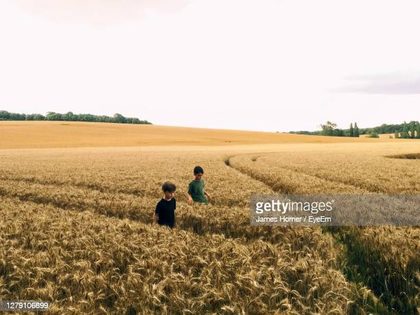 two boys walking in a wheat field against sky - spreading stock pictures, royalty-free photos & images