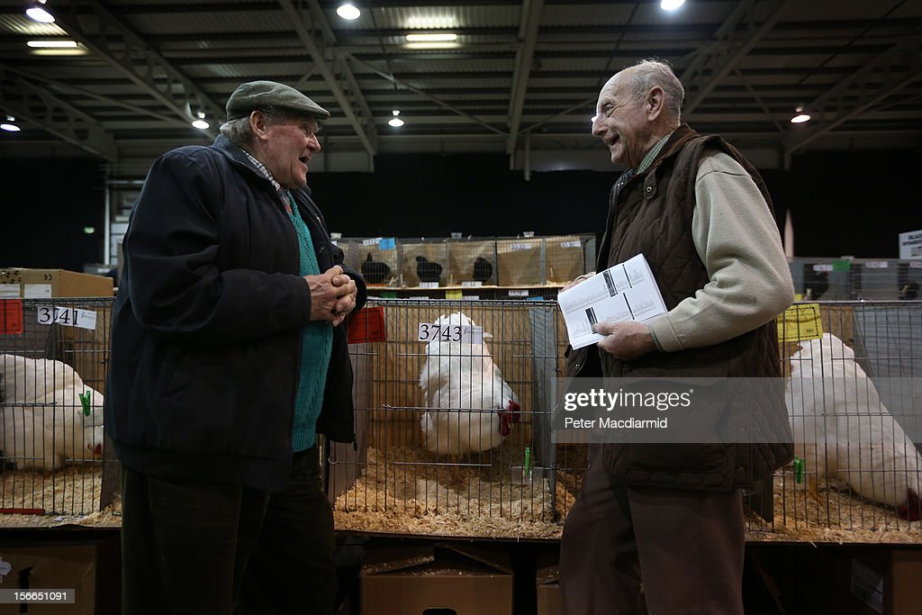 Two breeders chat at The National Poultry Show on November 17, 2012 in Stoneleigh, England.Thousands of people have attended The Poultry Club's 2012 National Show. The Poultry Club was founded 1877, and was established to safeguard the interests of all pure and traditional breeds of poultry including chickens, ducks, geese and turkeys.