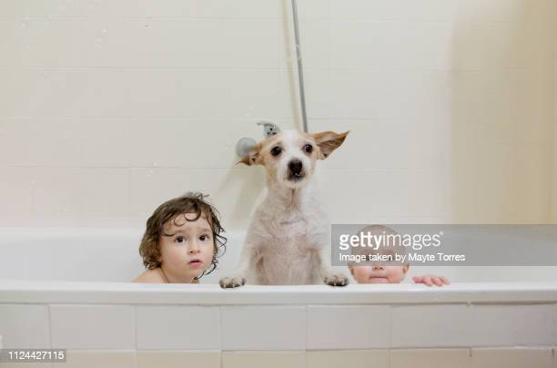 two brothers take a bath with the dog - taking a bath stock pictures, royalty-free photos & images