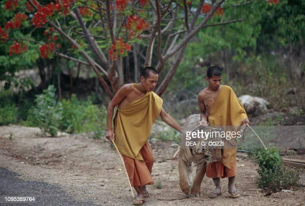 Two Buddhist monks and a tiger Wat Pha Luang Ta Bua Temple Kanchanaburi Thailand