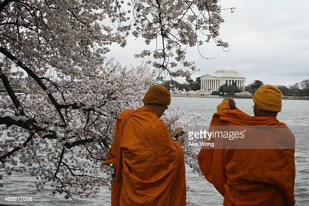 Two Buddhists monks take pictures in front of blooming Cherry Blossom trees at the Tidal Basin April 8 2015 in Washington DC The Cherry trees around...