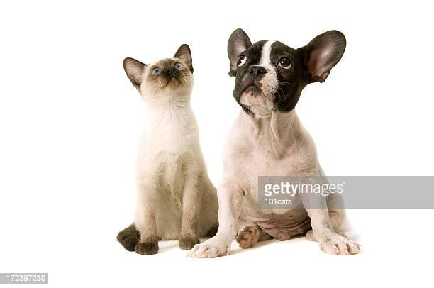 two buddies - dog and cat stock photos and pictures
