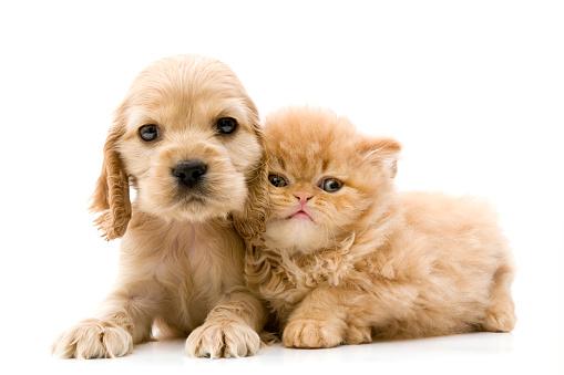 two buddies 172720908