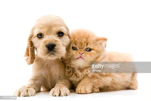 two buddies - cute stock pictures, royalty-free photos & images