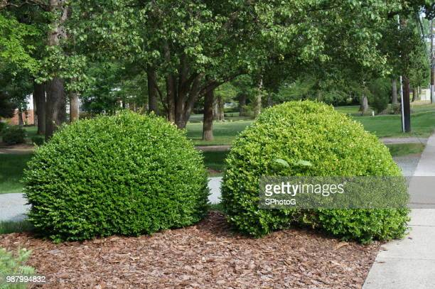 two bushes - bush stock pictures, royalty-free photos & images