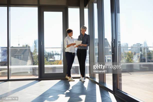 two businesswomen discussing document at the window in bright office - german short haired pointer stock pictures, royalty-free photos & images