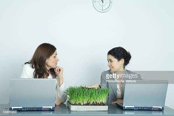 Two businesswomen sitting at laptops, one touching tray of wheatgrass