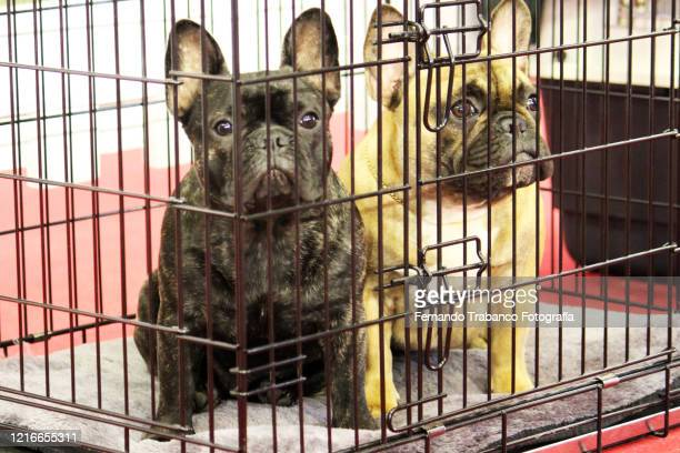 two caged dogs - cage stock pictures, royalty-free photos & images