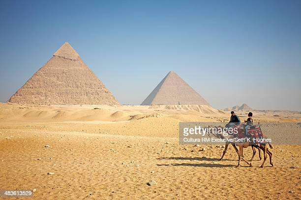 Two camels crossing in front of the pyramids of Giza, Egypt