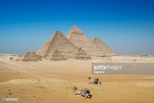 two camels in front of giza pyramid complex near cairo, egypt - giza pyramids stock pictures, royalty-free photos & images