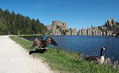 Two Canada Geese At Sylvan Lake, Custer State Park, South Dakota