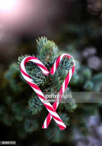 two candy canes hanging on a christmas tree in a heart shape - candy cane stock pictures, royalty-free photos & images