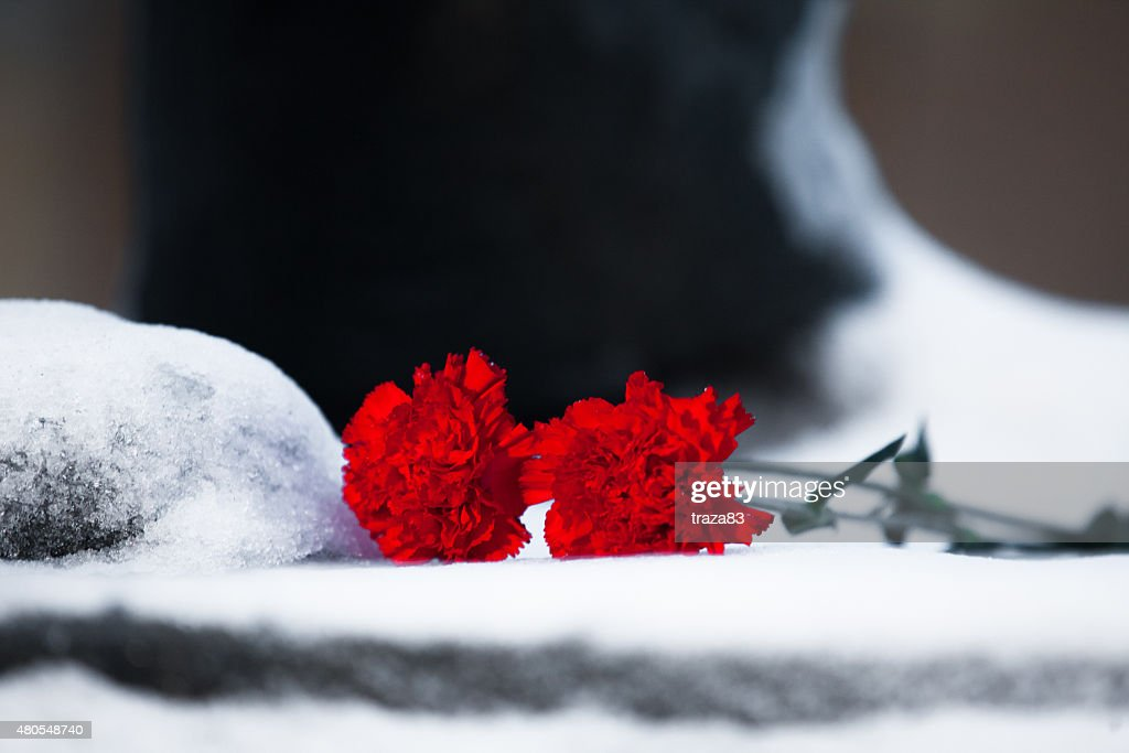 Two carnation flower on snow close up : Stock Photo
