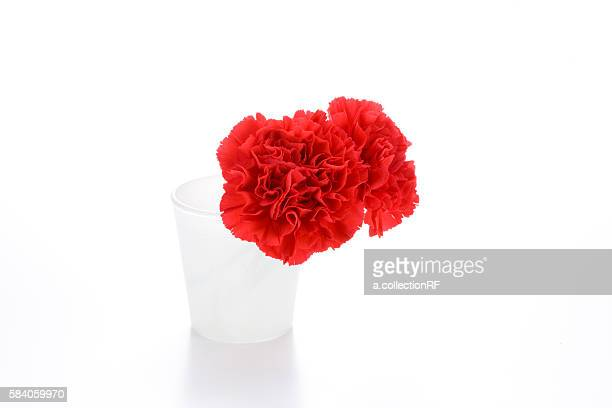 Two carnations in a vase