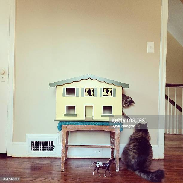 Two Cats and a Dollhouse