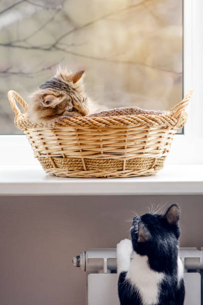 Two Cats Communication - An Invitation To Play