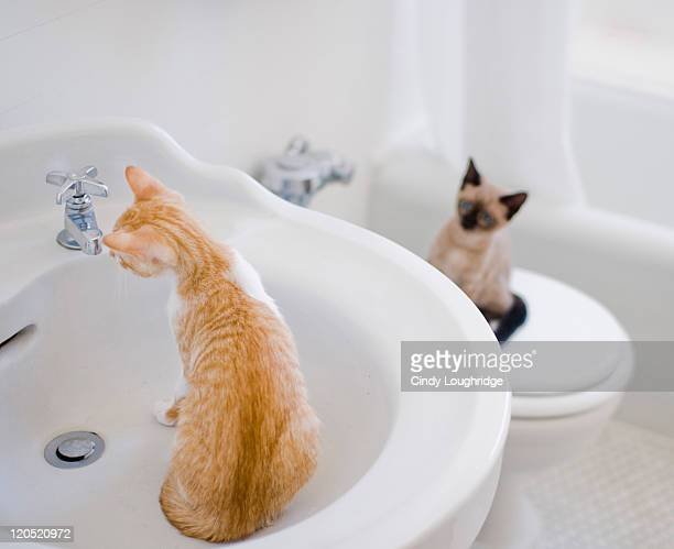 Two cats fascinated with sink and bathtub