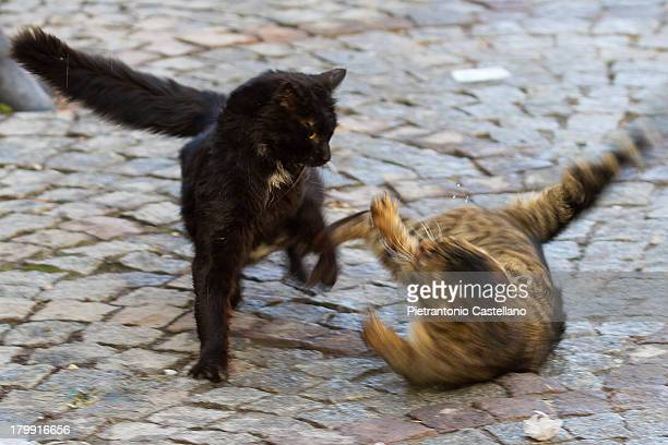 Two cats have a heated argument in the streets of Ankara.