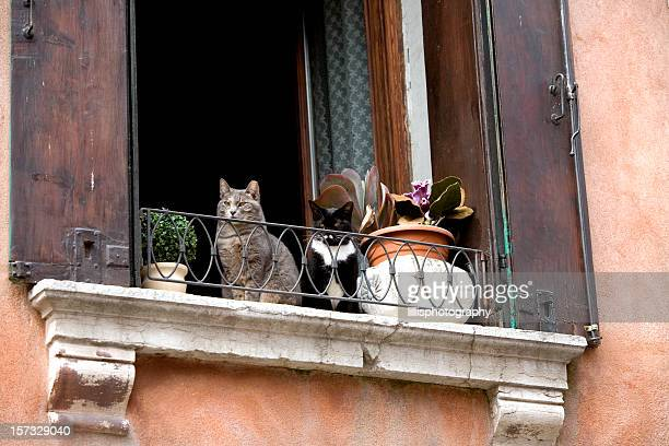 Two Cats in a Window Venice Italy