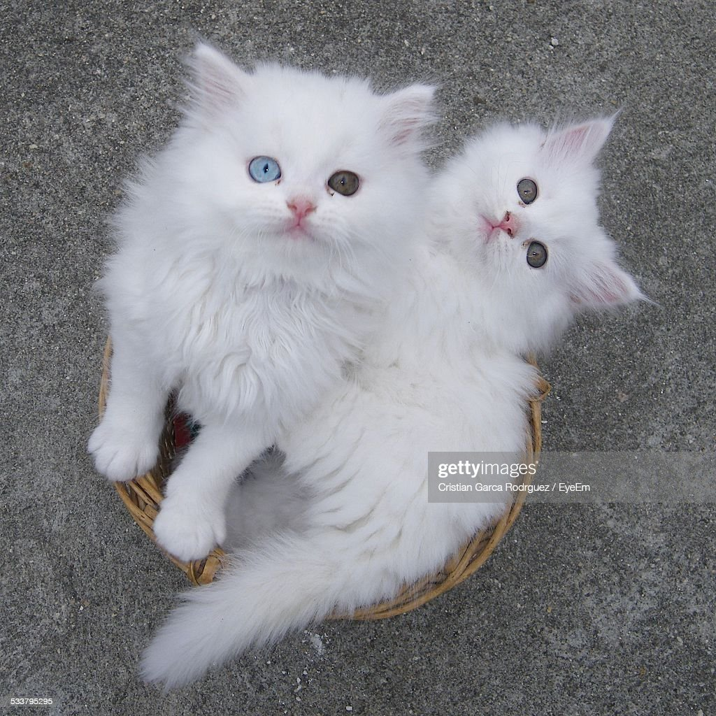 Two Cats In Basket : Foto stock
