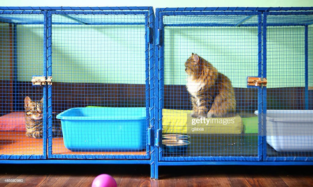 Two cats in cat shelter. : Stock Photo