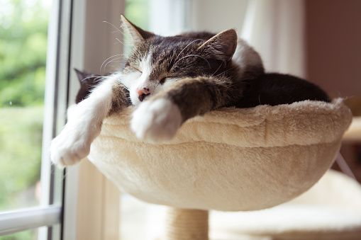 two cats in smal hammock 1010539662