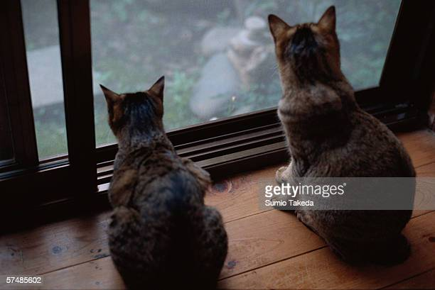 Two cats looking through window, rear view