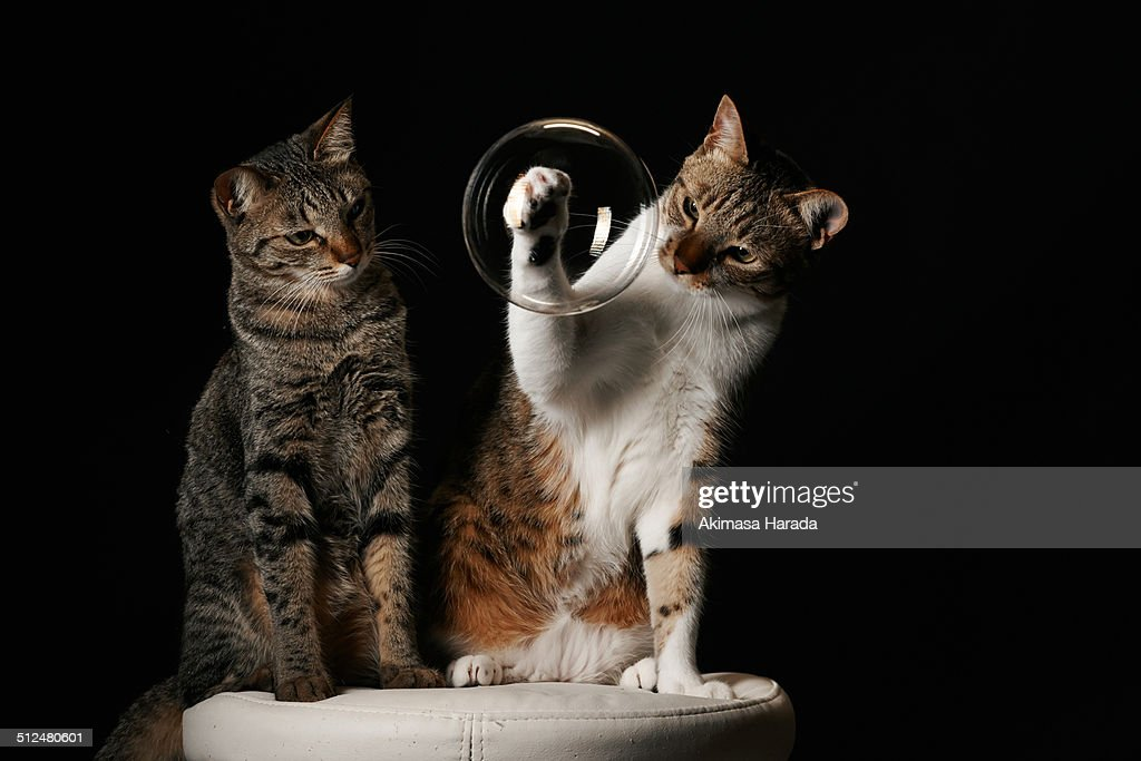 Two cats looking with curious the bubble.