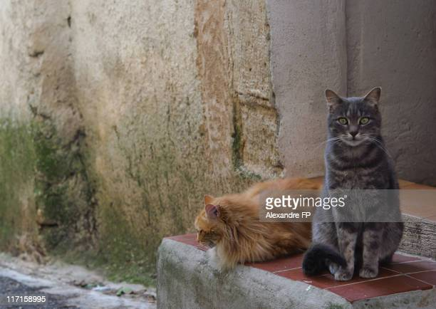 Two cats on doorstep