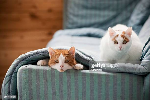 Two cats on sofa