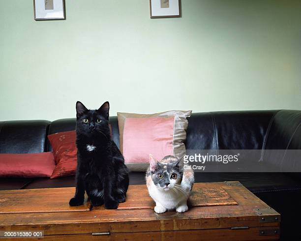 Two cats on table, sitting and lying