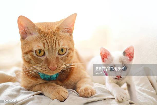 Two cats on the bed