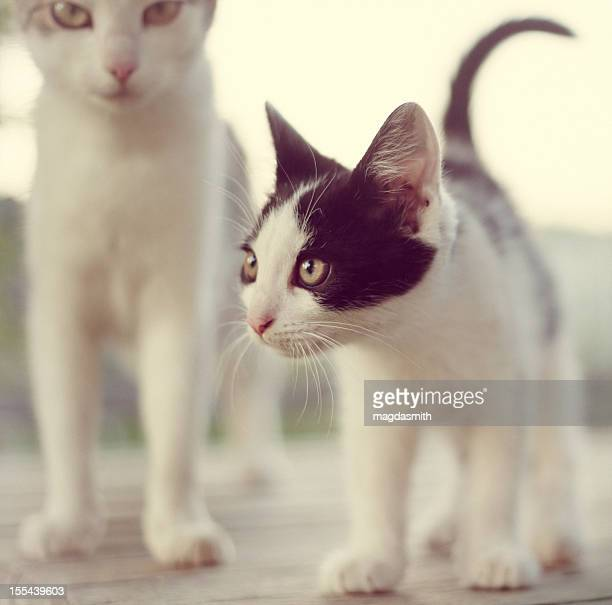 two cats outdoors - magdasmith stock pictures, royalty-free photos & images