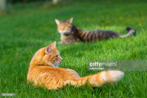 two cats - number 2 stock pictures, royalty-free photos & images