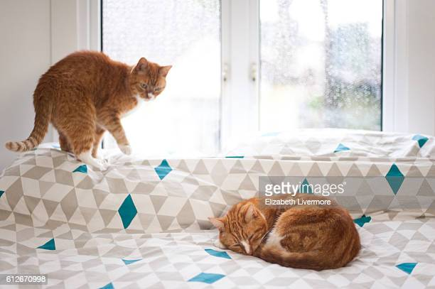 Two cats relax on a bed