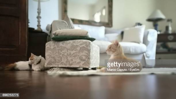 two cats relaxing at home - caputo foto e immagini stock