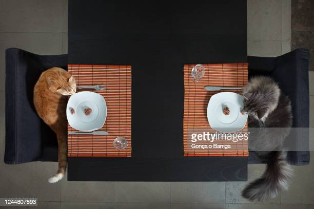 two cats seated at a table with plates of cat food, table settings, cutlery and white china plate. - two animals stock pictures, royalty-free photos & images