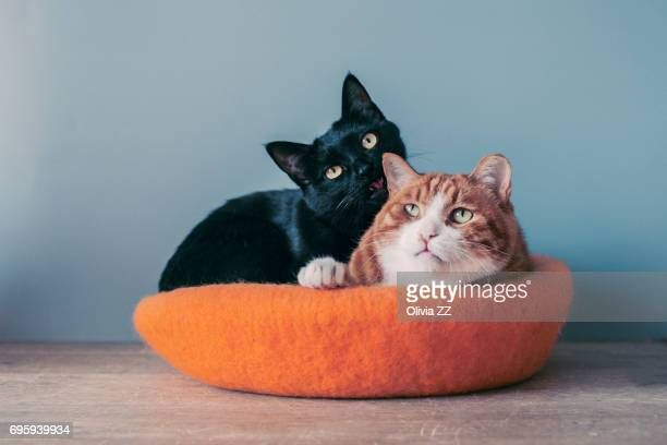 Two cats sit in a cat's nest