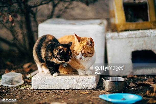 Two cats sitting one polystyrene panel, front view
