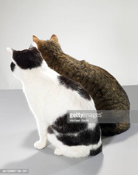 Two cats sitting side by side, rear view