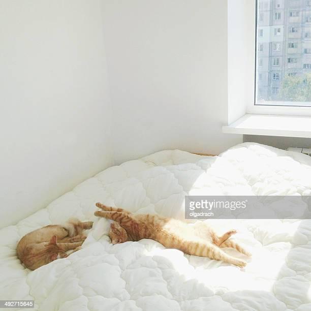 Zwei Katzen Schlafen auf dem Bett