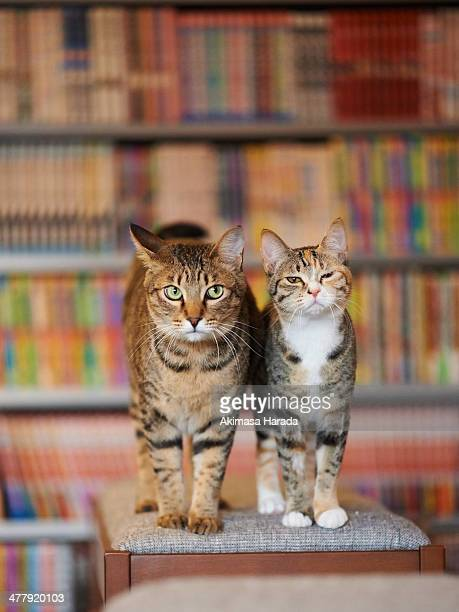 Two cats stands on the stool
