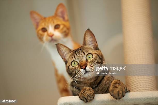 Two cats staring something with curiosity