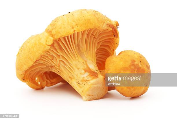 Two chanterelle mushrooms isolated in white