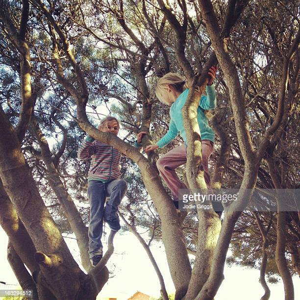 Two children climbing in a tree