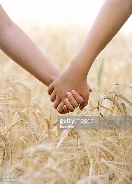 two children holding hands on a corn field. - only girls stock pictures, royalty-free photos & images