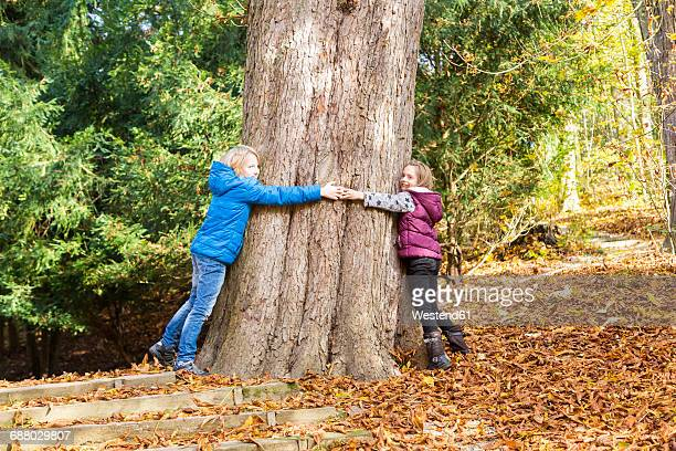 two children hugging tree in autumn - thick girls stock photos and pictures