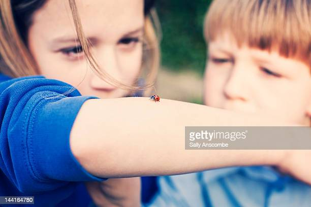 two children looking at ladybird - coccinella foto e immagini stock